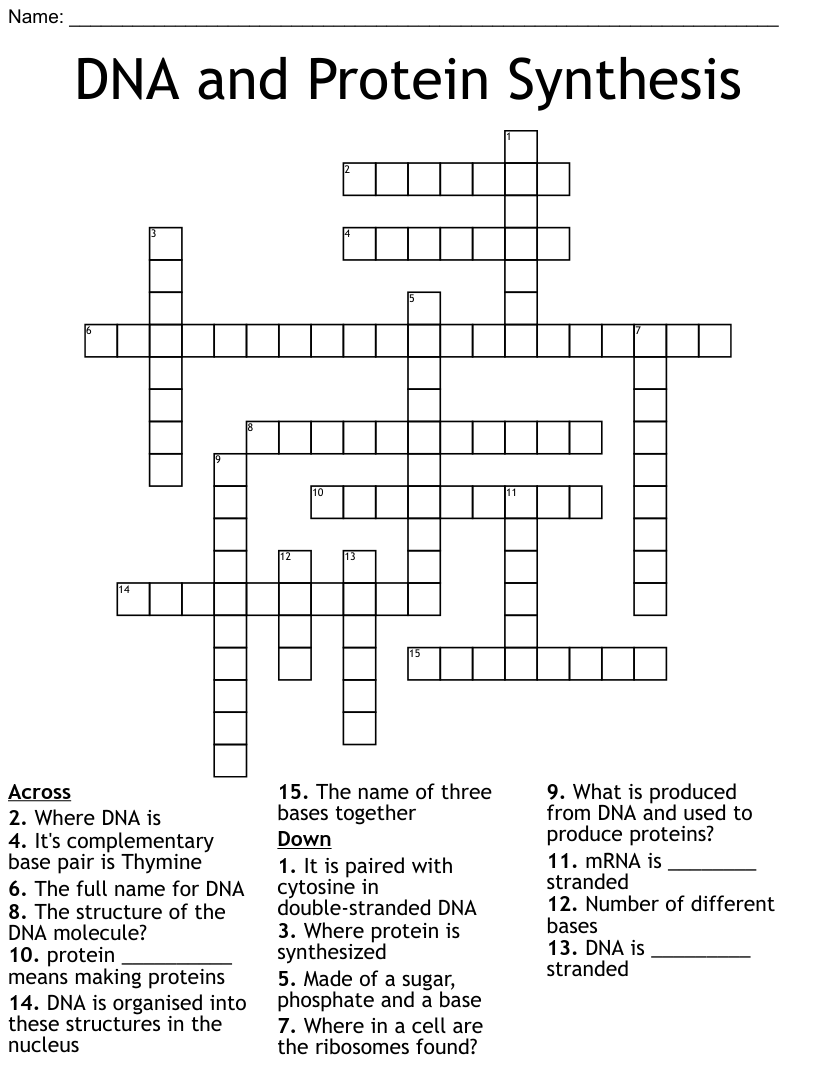 DNA, RNA, Protein Synthesis crossword - WordMint