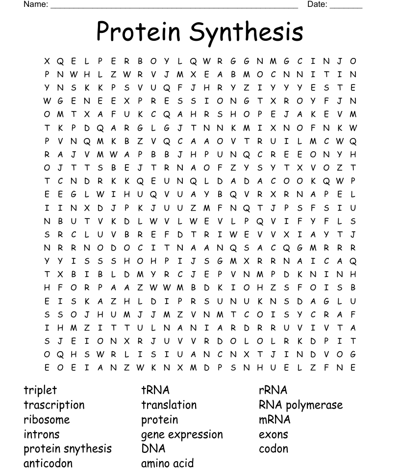 Protein Synthesis Word Search - WordMint