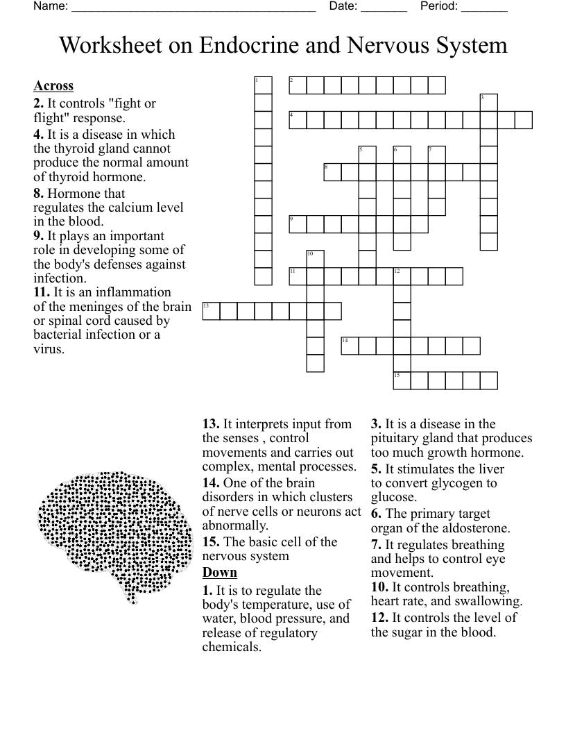 Worksheet on Endocrine and Nervous System Crossword - WordMint With Regard To Nervous System Worksheet High School